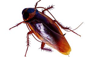 秦皇岛除蟑螂的三种方法
